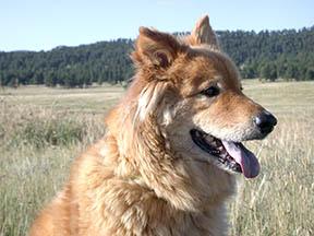 My dog Boofy in Elk Meadow, Evergreen, Colorado